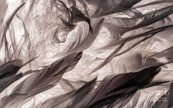Photograph - Feathers by Lyl Dil Creations