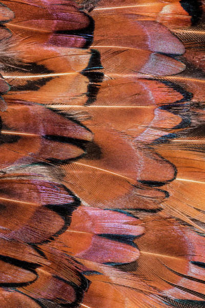 Wall Art - Photograph - Feather Pattern Colorful Feather Pattern by Adam Jones