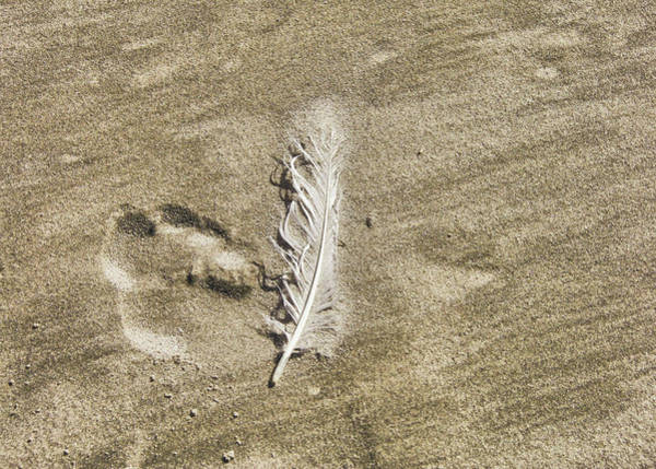 Photograph - Feather Print by JAMART Photography