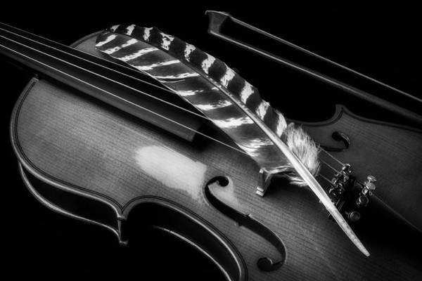 Photograph - Feather Resting On Violin Black And White by Garry Gay