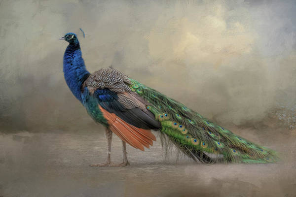 Photograph - Feathered Dreams by Kelley Parker
