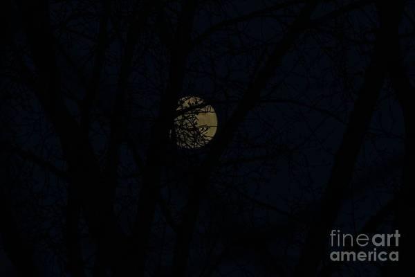 Photograph - February Snow Moon by Ann E Robson