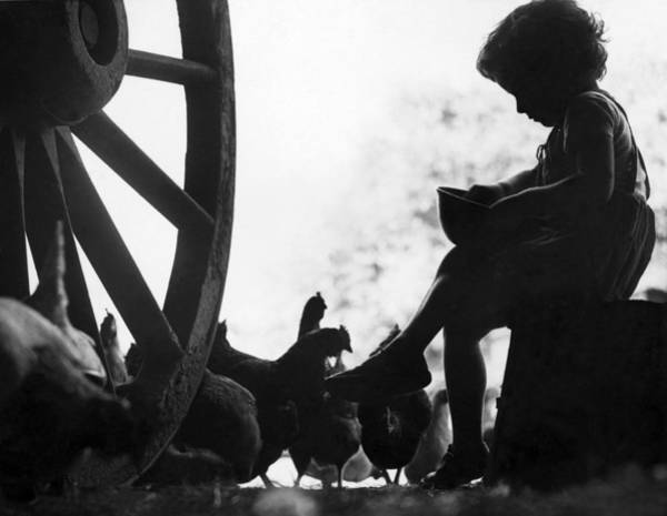 Poultry Photograph - Feeding Chickens by N Smith