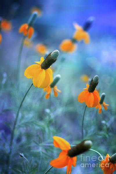 Photograph - Feeling Free by Susan Warren