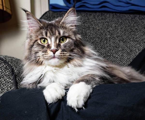 Photograph - Feline Beauty by Martin Gollery