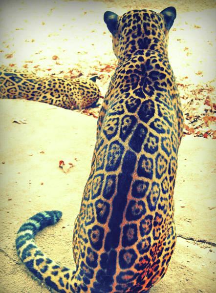 Photograph - Feline Rosettes by JAMART Photography