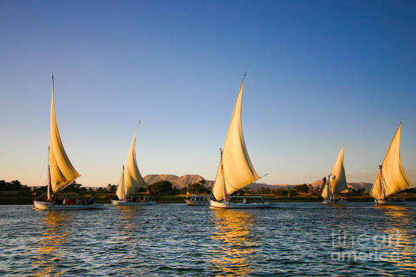 Wall Art - Photograph - Felucca On The Nile River by Jeffrey Liao