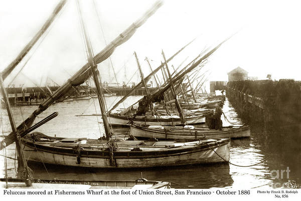 Photograph - Feluccas At Fisherman's Wharf, Foot Of Union Street, San Franc by California Views Archives Mr Pat Hathaway Archives