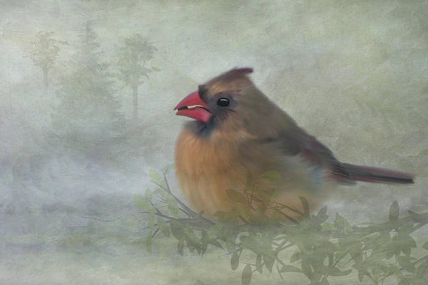 Female Cardinal With Seed Art Print