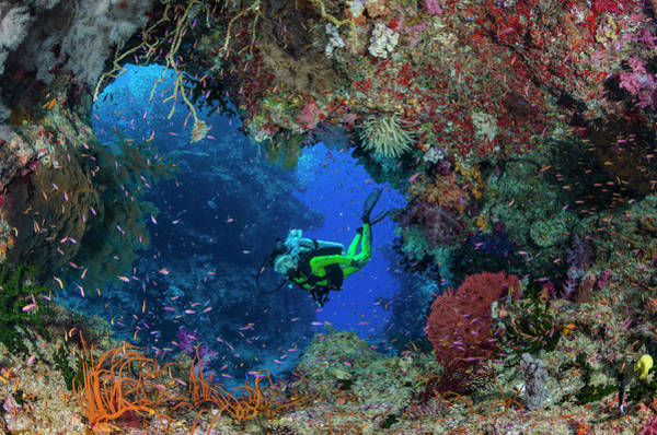 Underwater Photograph - Female Diver Looking Though Tunnel In by Pete Atkinson