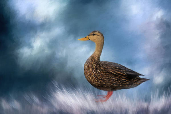 Wall Art - Photograph - Female Mallard Duck by Kim Hojnacki