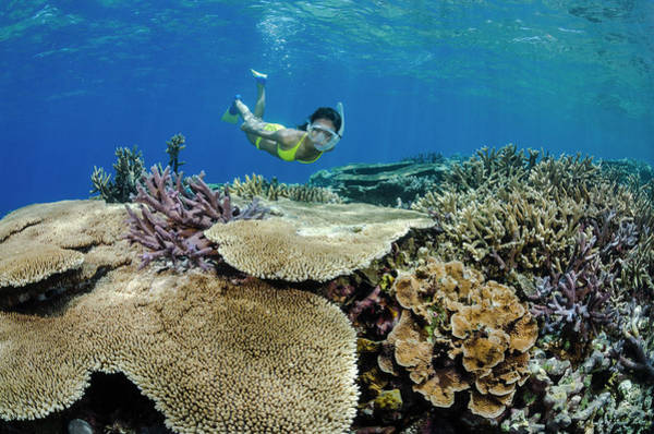 Underwater Photograph - Female Snorkeler Over Coral Reef by Pete Atkinson