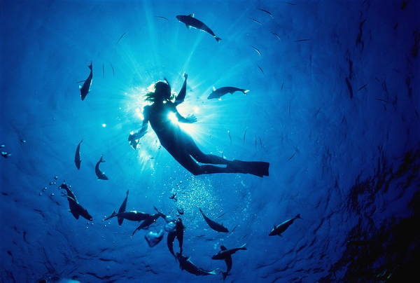 Sport Fish Photograph - Female Snorkler And Fish by A. Witte/c. Mahaney