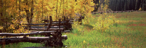Wall Art - Photograph - Fence In A Forest, Ridgway, Ouray by Panoramic Images