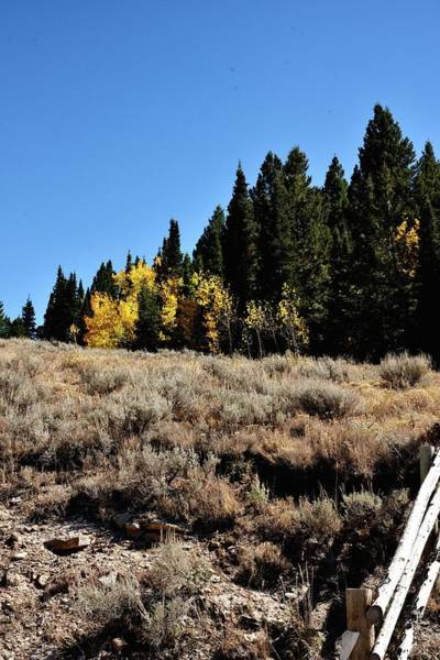 Photograph - Fence To Fall Color by Jerry Sodorff