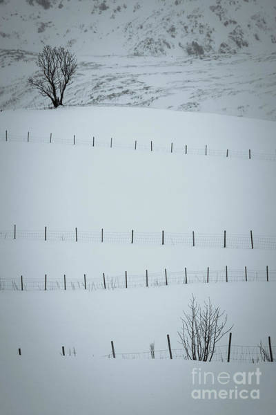 Wall Art - Photograph - Fences And Trees by Inge Johnsson