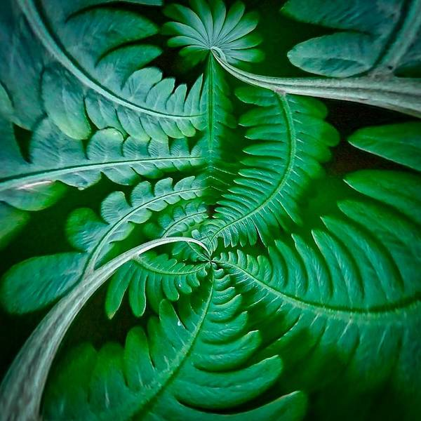 Digital Art - Fern Dance by Susan Rydberg