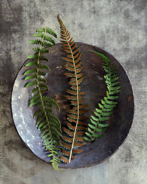 Leaf Photograph - Fern Fronds In Bowl by Rita Maas