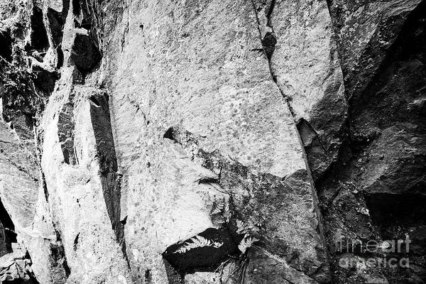 Wall Art - Photograph - Fern Growing In Crack In Volcanic Exposed Rock Part Of The Borrowdale Volcanic Group And Natural Sto by Joe Fox