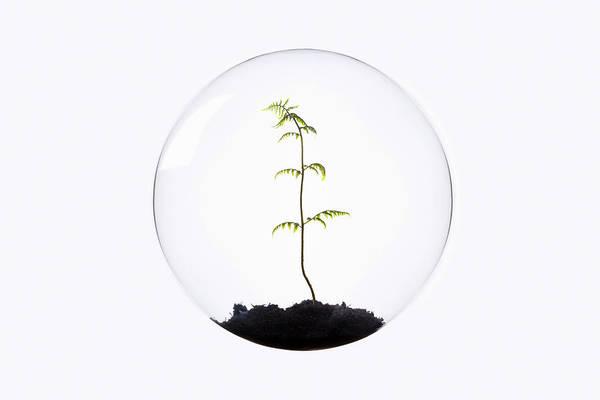 Beginnings Photograph - Fern Growing Inside Glass Orb by Thomas Jackson