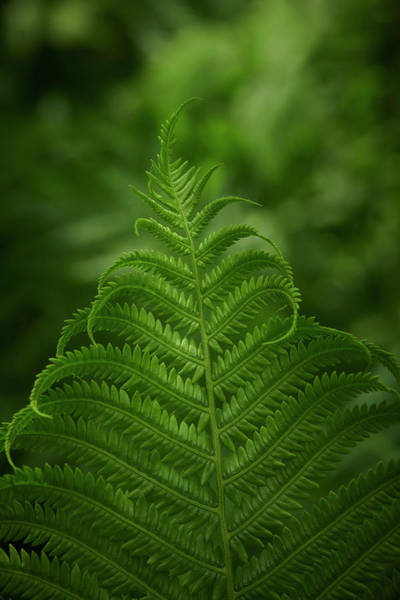 Wall Art - Photograph - Fern In The Forest by Paul Freidlund