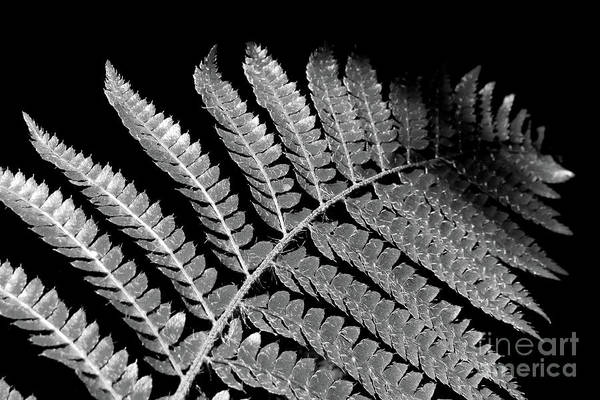 Wall Art - Photograph - Fern Leaf Black And White by Delphimages Photo Creations