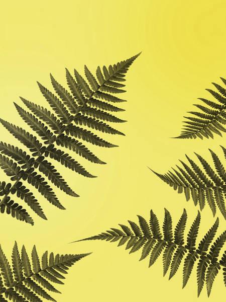 Wall Art - Photograph - Fern Leaves 2 by Mark Rogan
