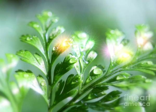 Photograph - Fern Sparkles by Patti Whitten
