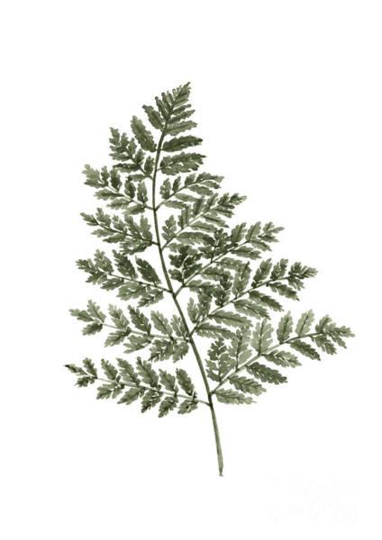 Twig Painting - Fern Twig Illustration Grey Plant Watercolor Painting by Joanna Szmerdt