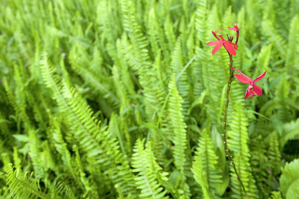 Botanical Photograph - Ferns In Bvumba National Botanical by Christopher Scott