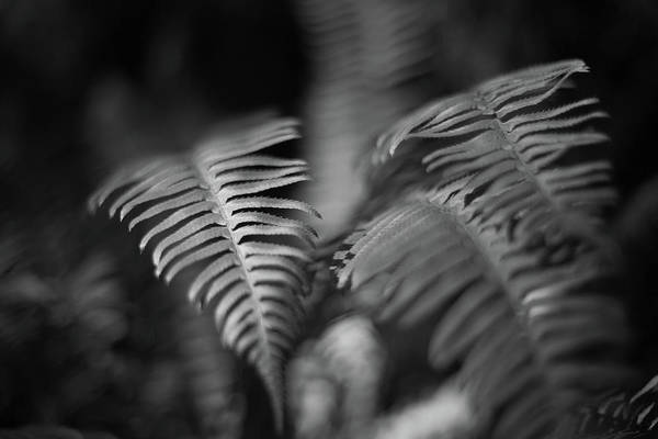 Photograph - Ferns In Rain Forest by Kyle Lee