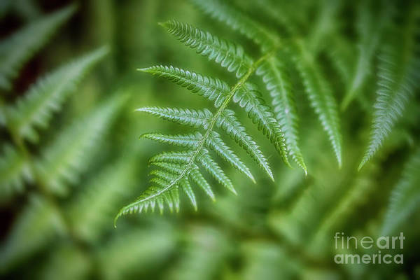 Wall Art - Photograph - Ferns by Veikko Suikkanen