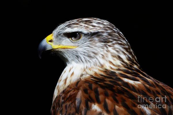 Photograph - Ferruginous Hawk by Sue Harper