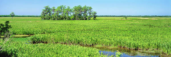 Wall Art - Photograph - Field, Jean Lafitte National Park, New by Panoramic Images