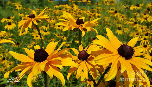 Digital Art - Field Of Black-eyed Susan  by CAC Graphics