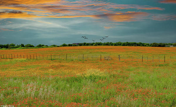 Photograph - Field Of Blanket Flowers by Gaylon Yancy