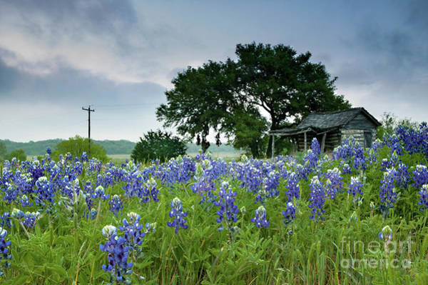 Photograph - Field Of Blue by Patti Schulze
