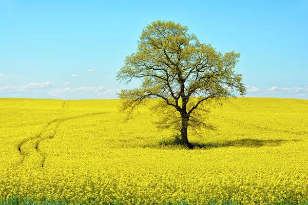 Wall Art - Photograph - Field Of Bright Yellow Rape by Joachim G Pinkawa