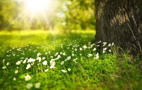 Photograph - Field Of Daisies by Top Wallpapers