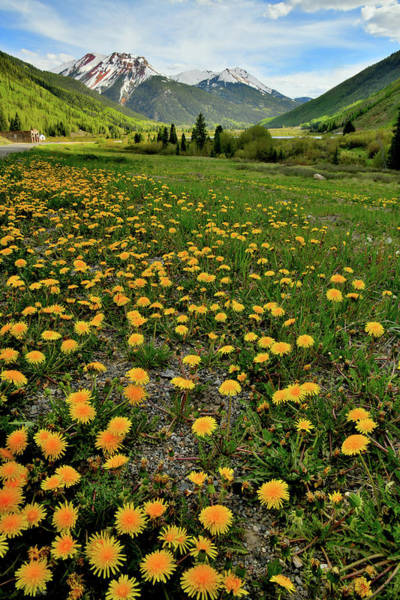 Photograph - Field Of Dandelions Beneath Red Mountains by Ray Mathis
