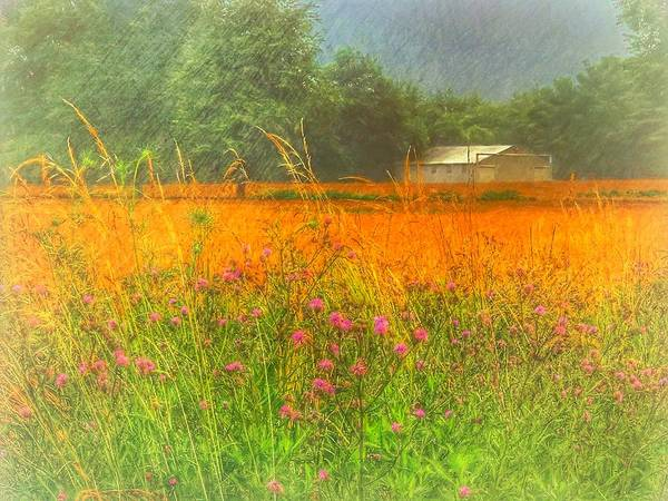 Photograph - Field Of Dreams by Jack Wilson