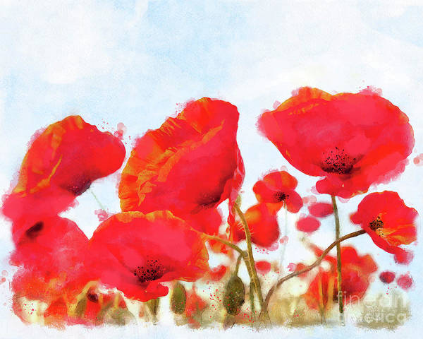 Wall Art - Painting - Field Of Dreams Poppy Watercolor Floral Art by Tina Lavoie