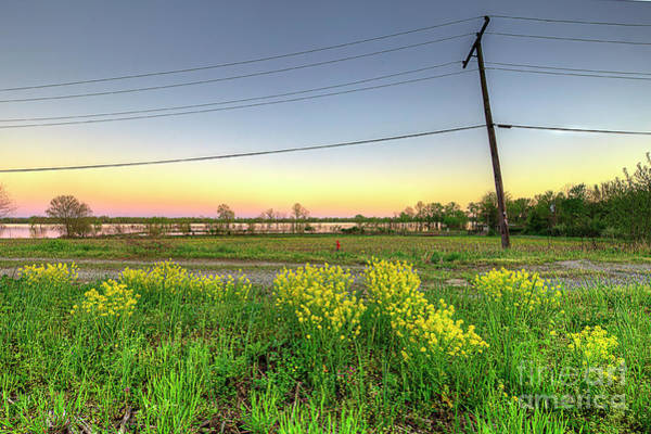 Wall Art - Photograph - Field Of Flowers by Larry Braun