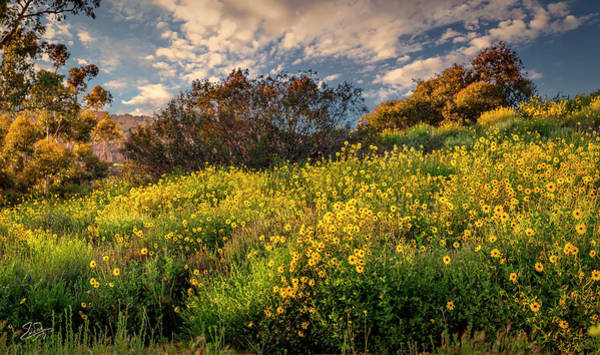 Photograph - Field Of Gold by Endre Balogh