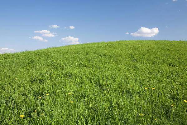 Wall Art - Photograph - Field Of Grass And Blue Sky With by Perry Mastrovito