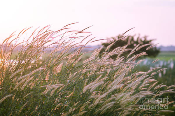 Wall Art - Photograph - Field Of Grass During Sunset For by Anurak Pongpatimet