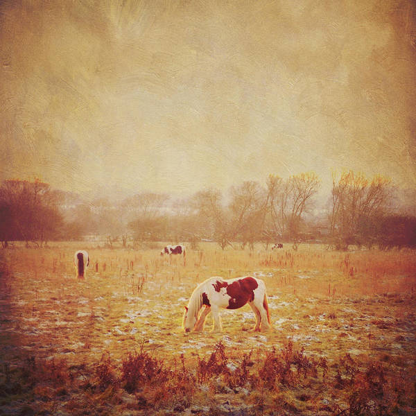 Randle Photograph - Field Of Horses by Photo - Lyn Randle
