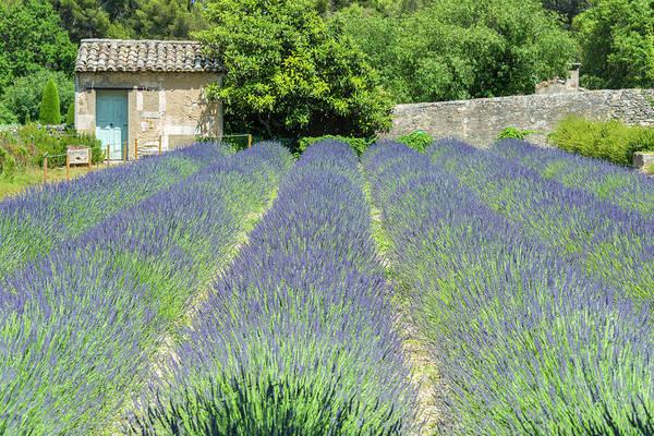 Wall Art - Photograph - Field Of Lavender, St by Jim Engelbrecht