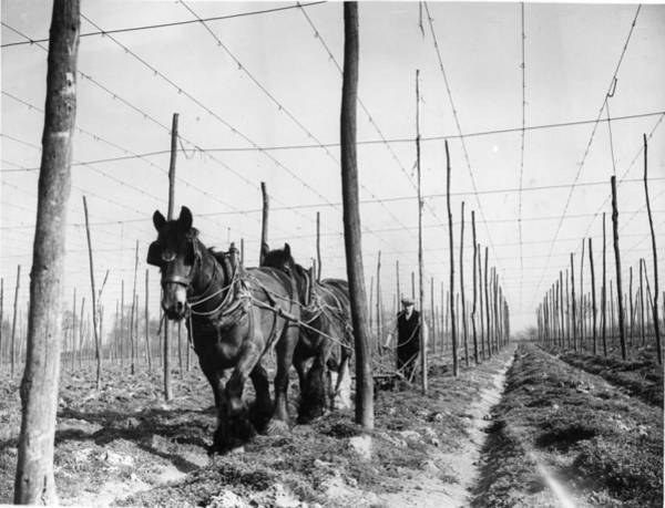 Plow Horses Photograph - Field Of Poles by William Vanderson