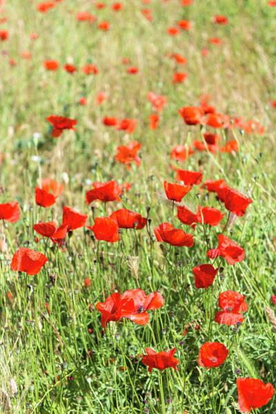 Wall Art - Photograph - Field Of Poppies by Jim Engelbrecht